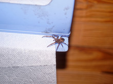 Spider Sitting On A Roll Of To...
