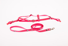 Harness And Straps For Pets On...
