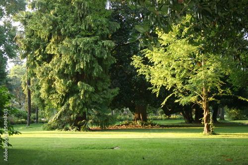 Fotografie, Obraz  Jardin Macé à Tarbes Hautes Pyrénées