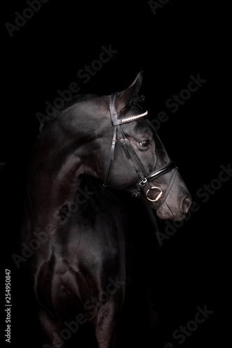 Fototapety, obrazy: Beautiful horse on a black background