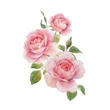 Watercolor Rose Composition