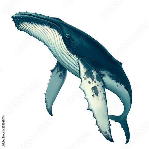 Fotografia, Obraz Humpback whale