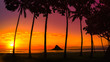 canvas print picture - sunset in Oahu with palm trees