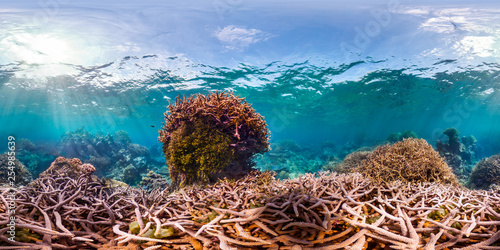 Stickers pour porte Pierre, Sable 360 of Acropora coral in Palmyra
