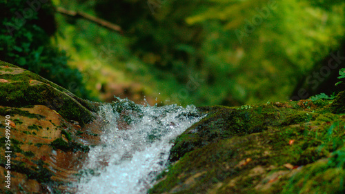 Acrylic Prints Forest river MACRO, DOF: Pure stream water droplets splashing over the moss covered rocks.