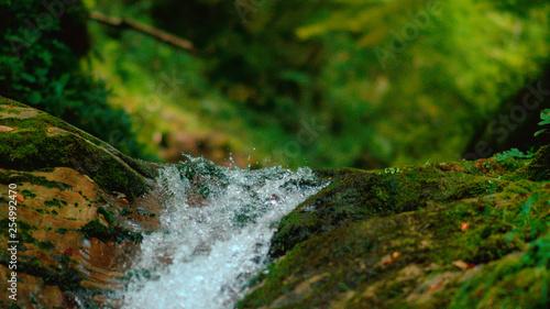 Printed kitchen splashbacks Forest river MACRO, DOF: Pure stream water droplets splashing over the moss covered rocks.