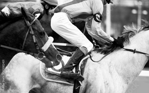 Photo horse race detail closeup in monochrome