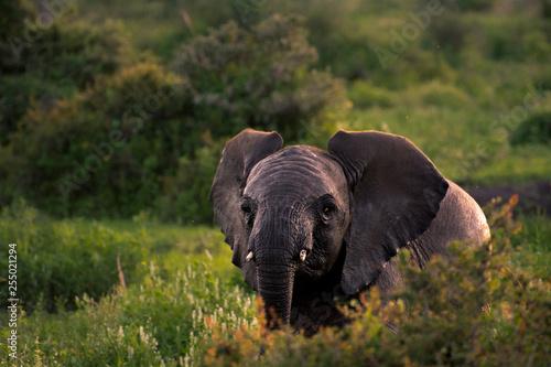 Photo elephant in field