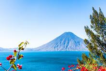 Volcano & Pink Flowers At Lake Atitlan, Guatemala