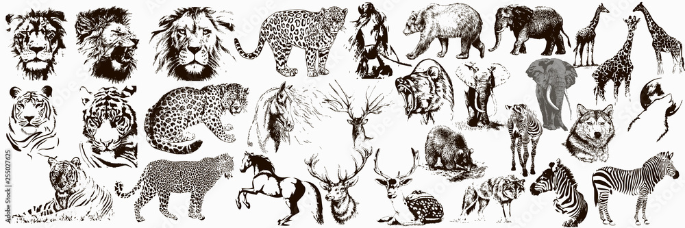 Fototapeta Big collection of wild animals. Exotic danger African. Tropical. Vector illustration on white background.