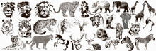 Big Collection Of Wild Animals...