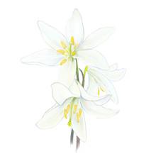 Lilie, Białe Kwiaty, 3, Komunia