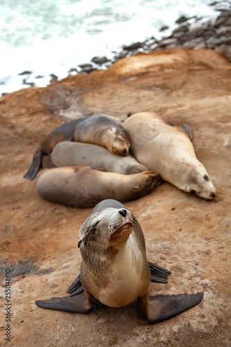 Photo  seals on the beach La Jolla California