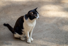 The Small Black And White Cat Is Sitting On Ground And Looking Around Carefully With Shade And Shadow Of The Sun.