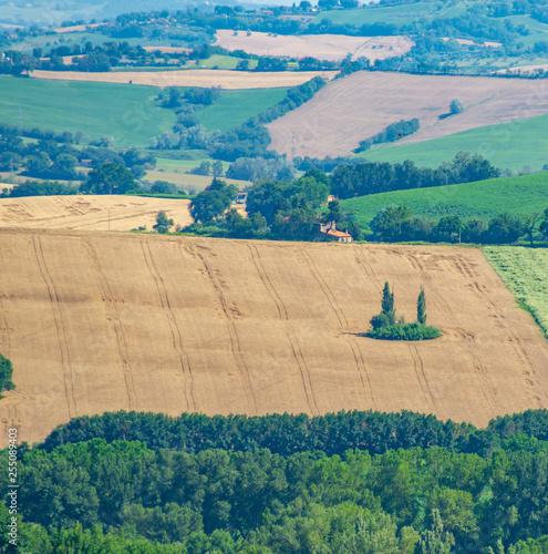 Fotografie, Obraz  Isola verde nel campo di grano