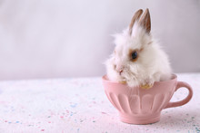 Cute Fluffy Rabbit In Cup On Table