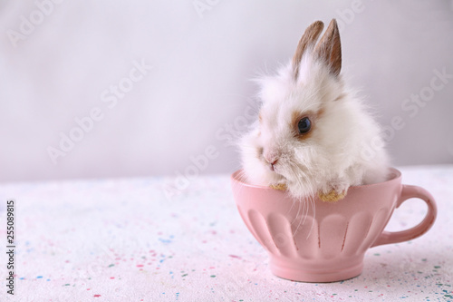 Foto  Cute fluffy rabbit in cup on table