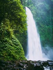 Fototapeta Wodospad Powerful waterfall in Bali. Tropical forest and waterfall