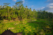 08-10-2018, Tegallalang Rice Terraces, Gianyar Regency, Bali, Indonesia. Rice Terraces Eco park