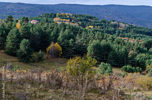 Fotografering  Amazing autumn view of glade, hill, forest with deciduous and coniferous trees a