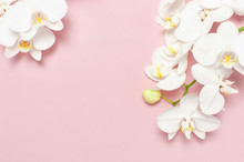 Beautiful White Phalaenopsis Orchid Flowers On Pastel Pink Background Top View Flat Lay. Tropical Flower, Branch Of Orchid Close Up. Pink Orchid Background. Holiday, Women's Day, Flower Card, Beauty