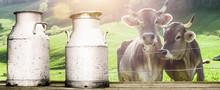 Kühe Mit Milchkannen