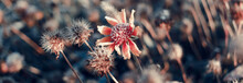 Beautiful Dry Flower Covered W...
