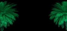 3d Render Of Neon Palm Leaves On The Black. Banner Design. Retrowave, Synthwave, Vaporwave Illustration.