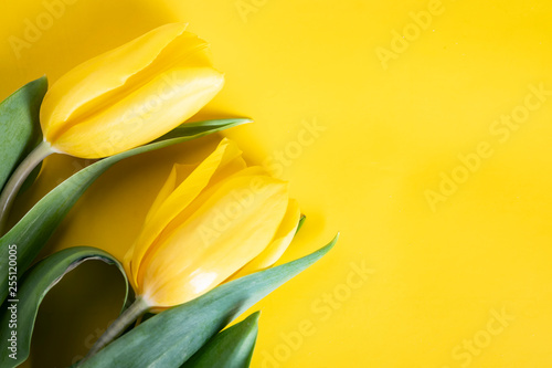 Wiosenne tulipany na żółtym tle