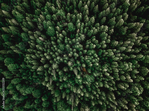 Fototapeten Wald Forrest aerial shot with trees sunlight