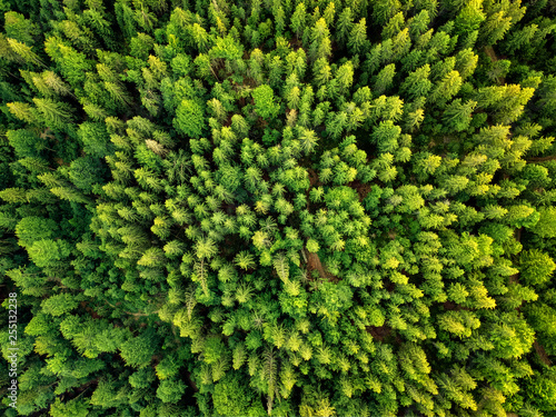 Slika na platnu Summer warm sun light forest aerial view