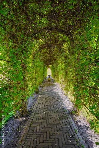 Photo Green berceau arbour  overgrown garden path