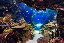 Aquarium With Fish, Blurred Fo...