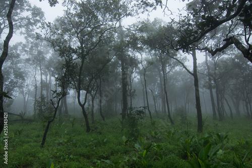 Fototapeta Fog forest nature green obraz na płótnie