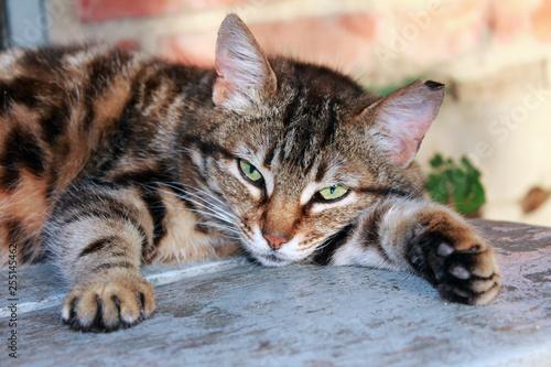 pasiasty kot odpoczywa na drewnianych schodkach