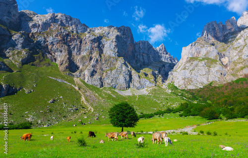 Picos de Europa, national part. Asturias, Spain. Wallpaper Mural