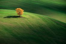 Lonely Tree, Val D'Orcia, Pienza, Siena, Tuscany, Italy