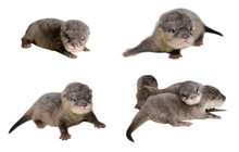 4 Acction Of Baby Otter