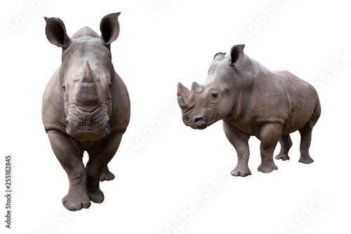 Fotografía white rhino