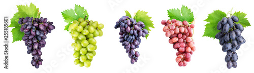Fotografia, Obraz Branch of grapes isolated on white background