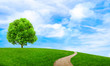 Leinwanddruck Bild - Green summer landscape scenic view wallpaper. Beautiful wallpaper. Solitary tree on grassy hill and blue sky with clouds. Lonely tree springtime. Green planet earth. Photo stock.