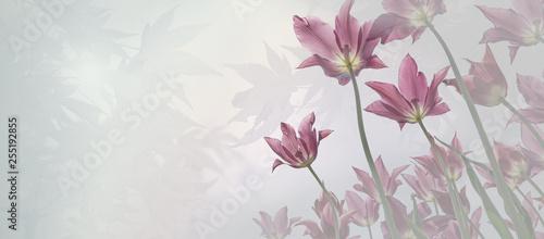 Trauer Hintergrund für Beileidskarte mit zarten Tulpen, Licht in den Ahornblätte Wallpaper Mural