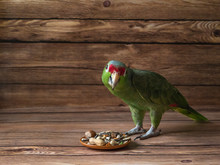 Green Amazon Parrot Eating Your Food.