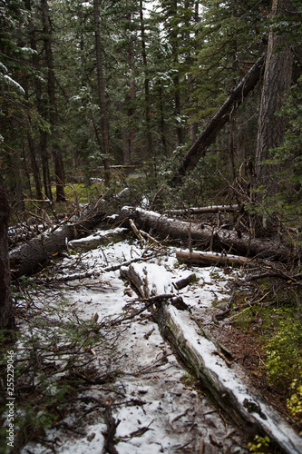 fallen trees with snow in the forest