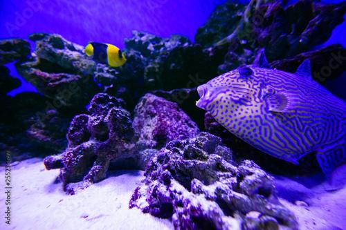 Fototapeta Wonderful and beautiful underwater world with corals and tropical fish. obraz na płótnie