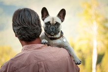 Rear View Of Man Carrying French Bulldog