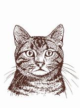 Graphical Vintage Portrait Of Cat, Sketchy Illustration