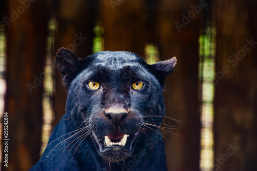 Foto auf Leinwand Panther Beautiful black Panther