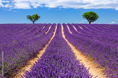 Fotobehang Lavendel Provence, France. Valensole plateau.