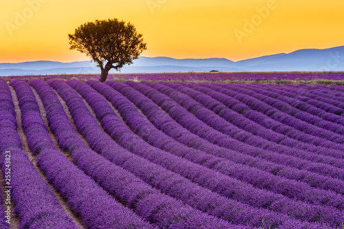 Canvas Prints Lavender Provence, France. Valensole plateau at sunset.